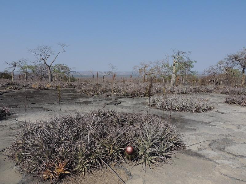 Levantamento ambiental e cultural para conservação de Curral de Pedras – MG