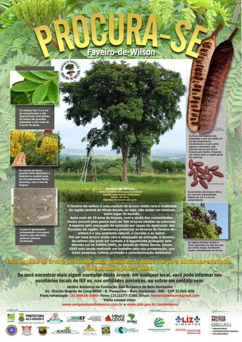Imagem 21 de Setembro – Dia da Árvore